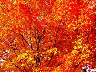 Lava Leaves by jojomercury