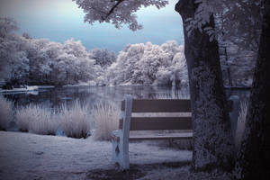 Bench Lake Bliss by tobiashibbs