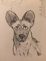 African Painted Dog by Ta-ak