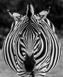 Black and White Stripes by fotomanisch