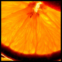 Orange by Klower