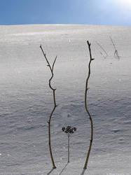snowwoman by Klower