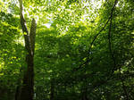 A Shady Canopy by CelticWolfwalker