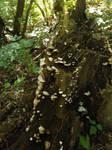 Little Fungi Stump by CelticWolfwalker