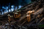 Mushrooms in the magic forest by McGoe