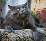cat 3 by ksphoto