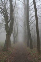 Misty Morning 8 by pelleron-stock