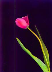 Floweret by JovialMiler