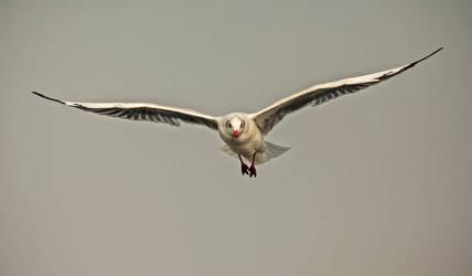 Bird... by mrbadguy7