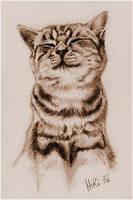 Whiskas Cat by Hiki-Hiki