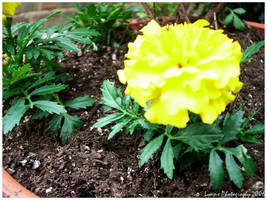 Yellow Flower by GiveInToLOVE