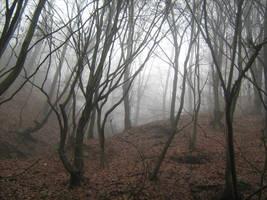 UNRESTRICTED - November '09 - Foggy Forest 1 by frozenstocks