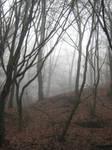 UNRESTRICTED - November '09 - Foggy Forest 2 by frozenstocks
