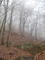 UNRESTRICTED - November '09 - Foggy Forest 4 by frozenstocks