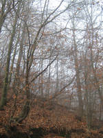 UNRESTRICTED - November '09 - Foggy Forest 5 by frozenstocks