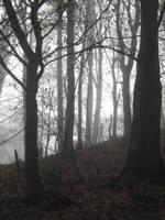 UNRESTRICTED - November '09 - Foggy Forest 12 by frozenstocks