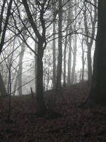 UNRESTRICTED - November '09 - Foggy Forest 13 by frozenstocks