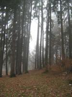 UNRESTRICTED - November '09 - Foggy Forest 14 by frozenstocks