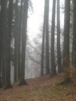 UNRESTRICTED - November '09 - Foggy Forest 15 by frozenstocks