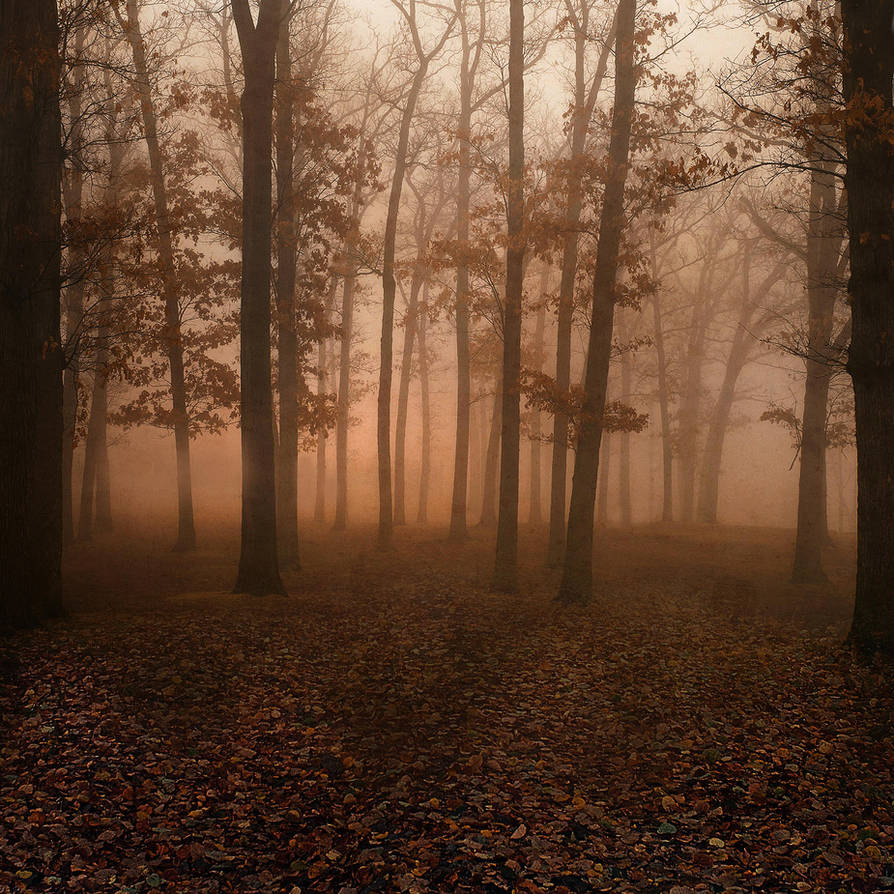 UNRESTRICTED - Autumn Forest Premade by frozenstocks