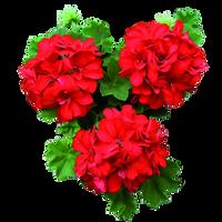 UNRESTRICTED - Flower 2 by frozenstocks