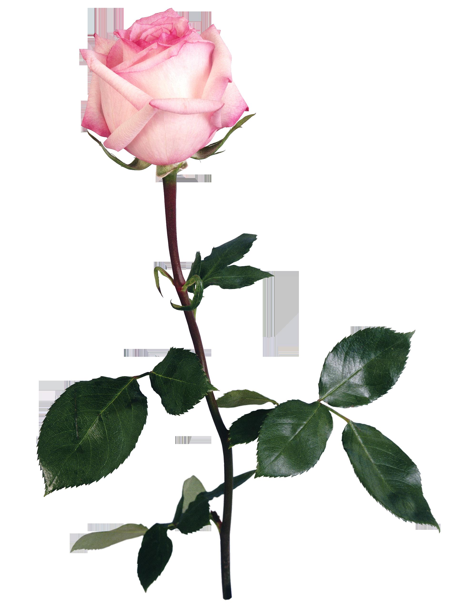 UNRESTRICTED - Flower 5 by frozenstocks