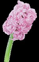 UNRESTRICTED - Flower 7 by frozenstocks