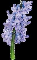 UNRESTRICTED - Flower 8 by frozenstocks