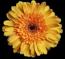 UNRESTRICTED - Flower 9 by frozenstocks