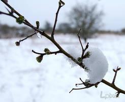 Snowy branch by Lpixel