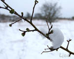 Snowy branch by Lpixel