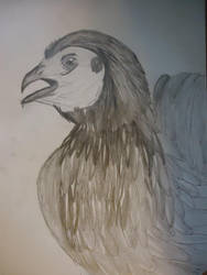 Old Chicken i had in 2007 by UltimateLazerbot