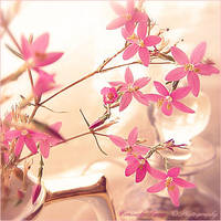 Small Pink Flowers by Consuelo-Parra