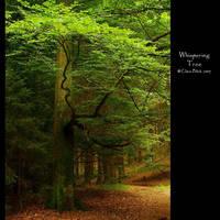 Whispering Tree by clarablick