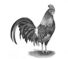 Cock by cowluva