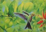 Spying the Hummingbird by ELLEliz
