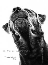 Vita - black lab by VitasArtworks