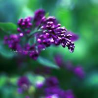 As Tears Go By by Healzo
