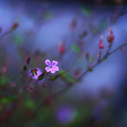 Pink Poison by Healzo