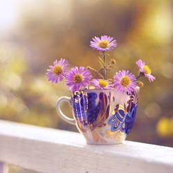 Fresh autumn morning by Healzo