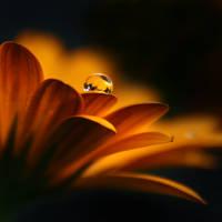 Golden Darkness by Healzo