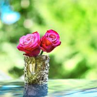 Rose love by Healzo