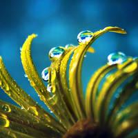Rainy Day by Healzo