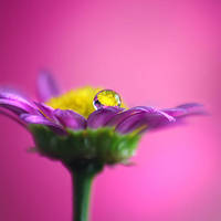 Pink Dreams by Healzo