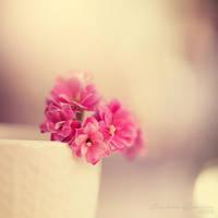 Sweet Mornings by Healzo