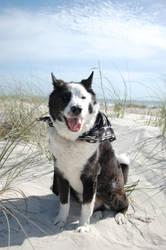 Beach Dog by crssafox