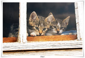 kittys by naturetimescape