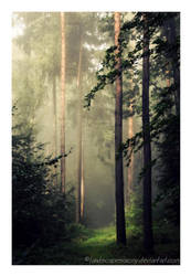 Autumn feelings no.6 by naturetimescape