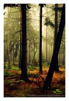Autumn feelings no.21 by naturetimescape
