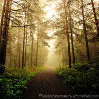 magic forest No.8 by naturetimescape